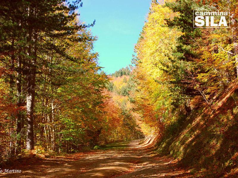 La bellezza di camminare in autunno 4