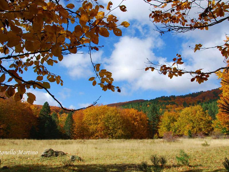 La bellezza di camminare in autunno 3